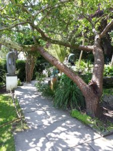 Tranquil garden scene with sculpture and old cherry tree