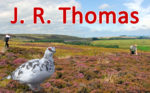Thumbnail JR Thomas J R Thomas Grouse Moor Ptarmigan