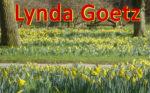 Thumbnail Lynda Goetz Daffodil scene