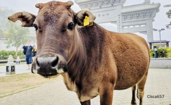 Issue 213: 2019 09 05: Foreign Aid Cull the sacred cow